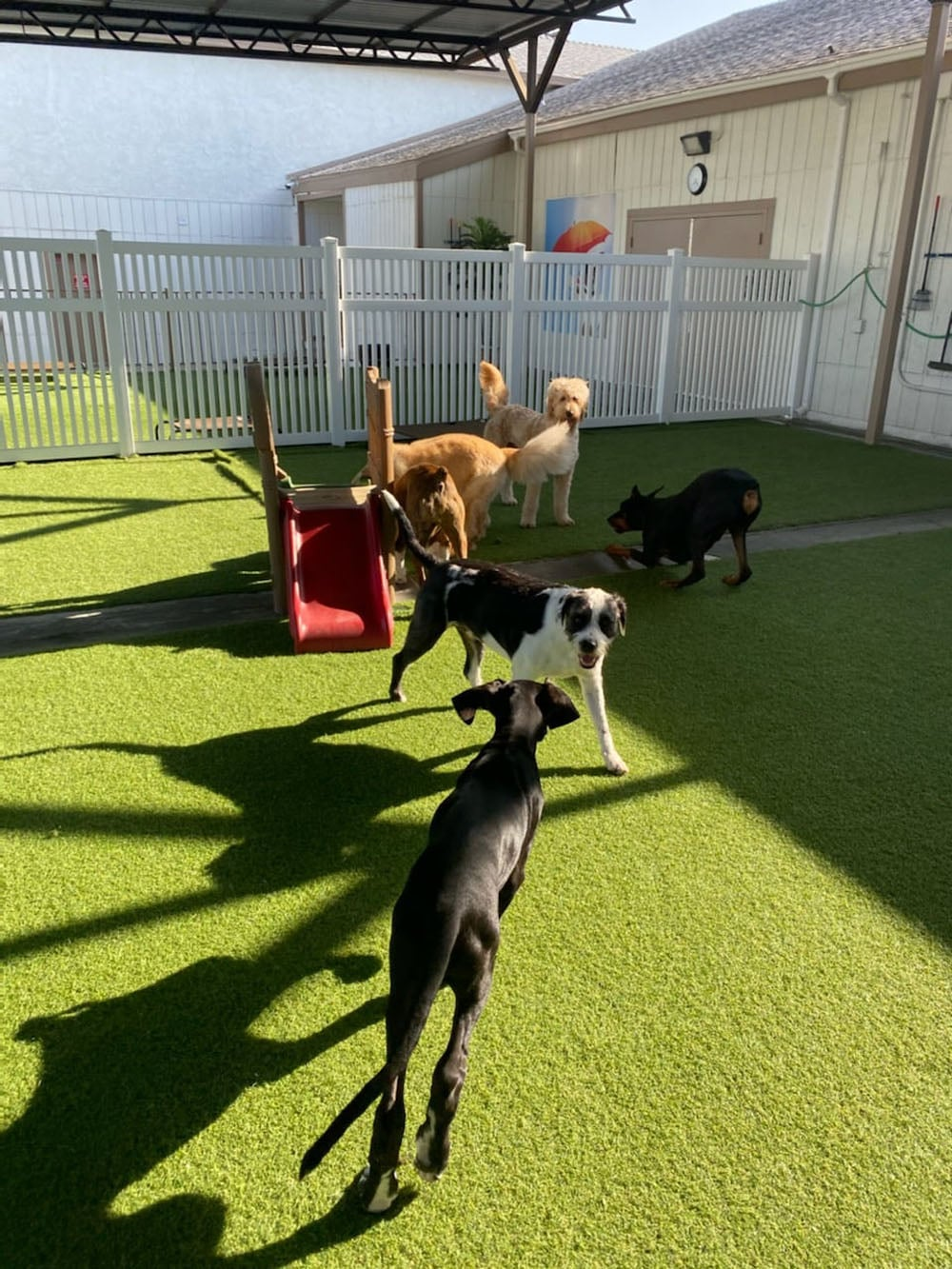 dogs resort gallery 12