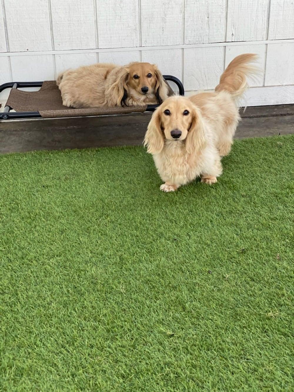 dogs resort gallery 14