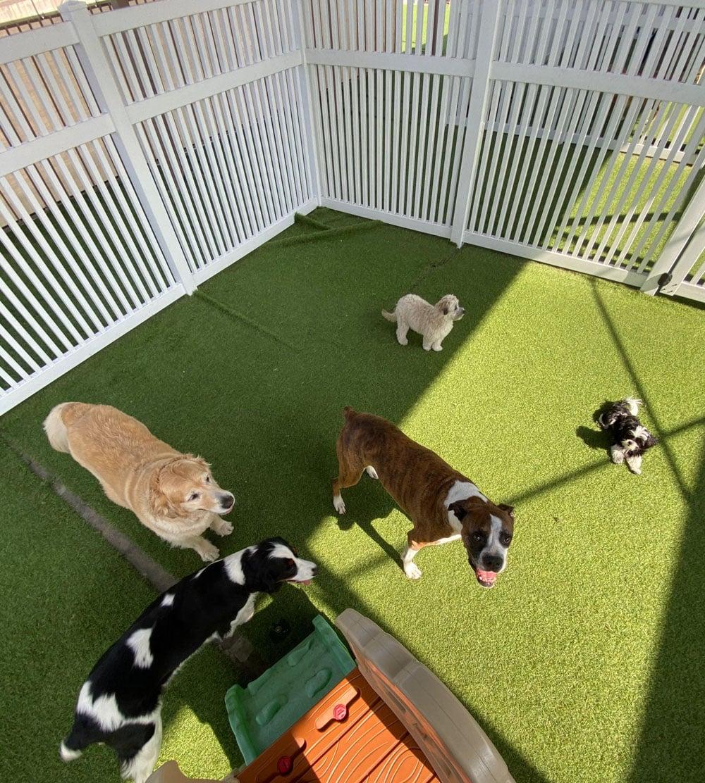 dogs resort gallery 15