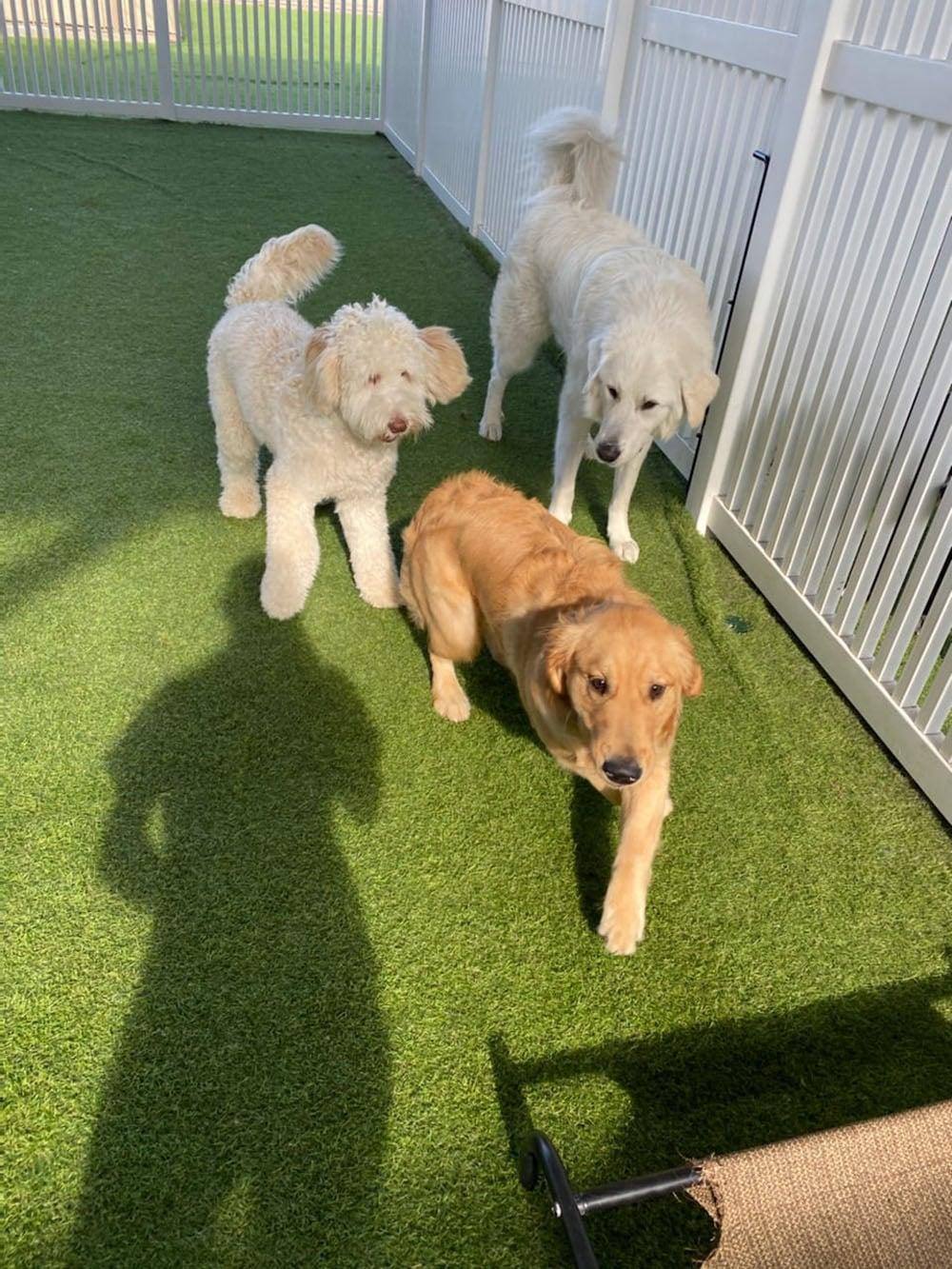 dogs resort gallery 16
