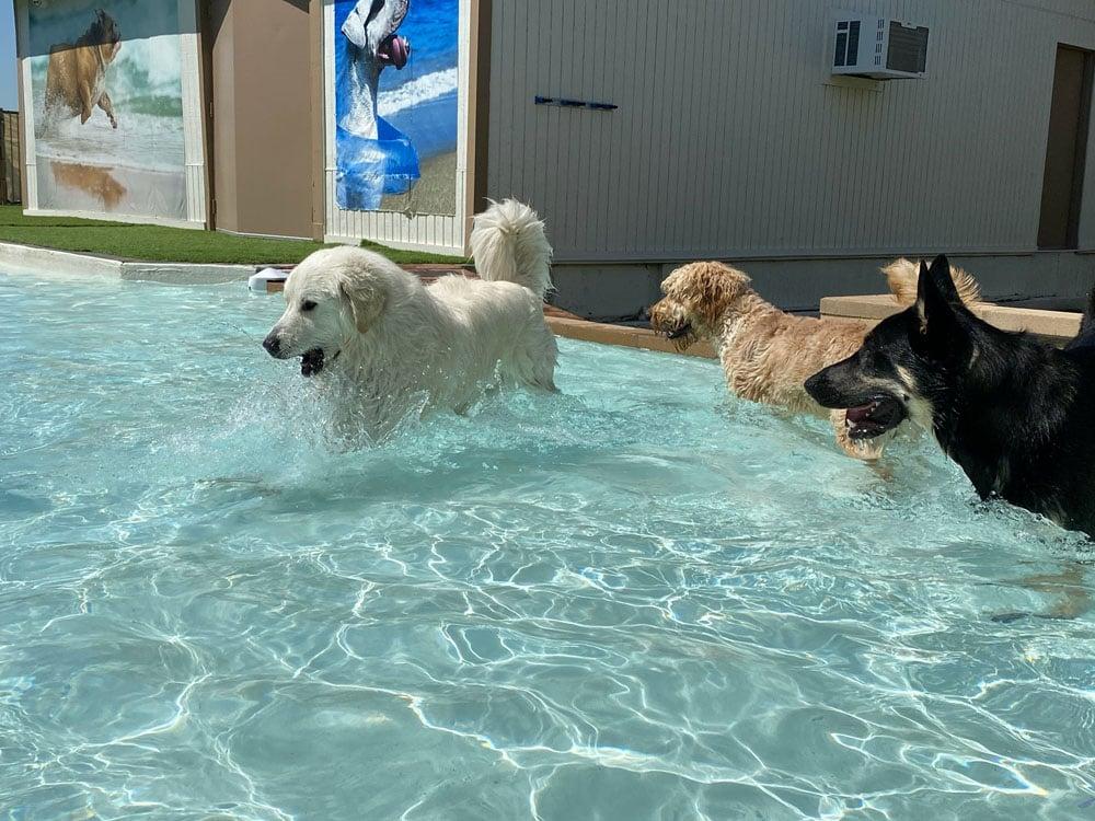 dogs resort gallery 18