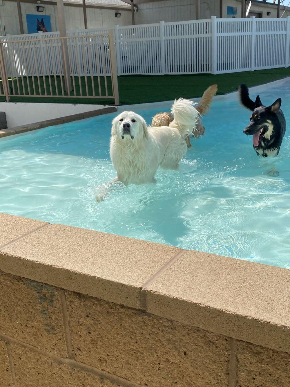 dogs resort gallery 19