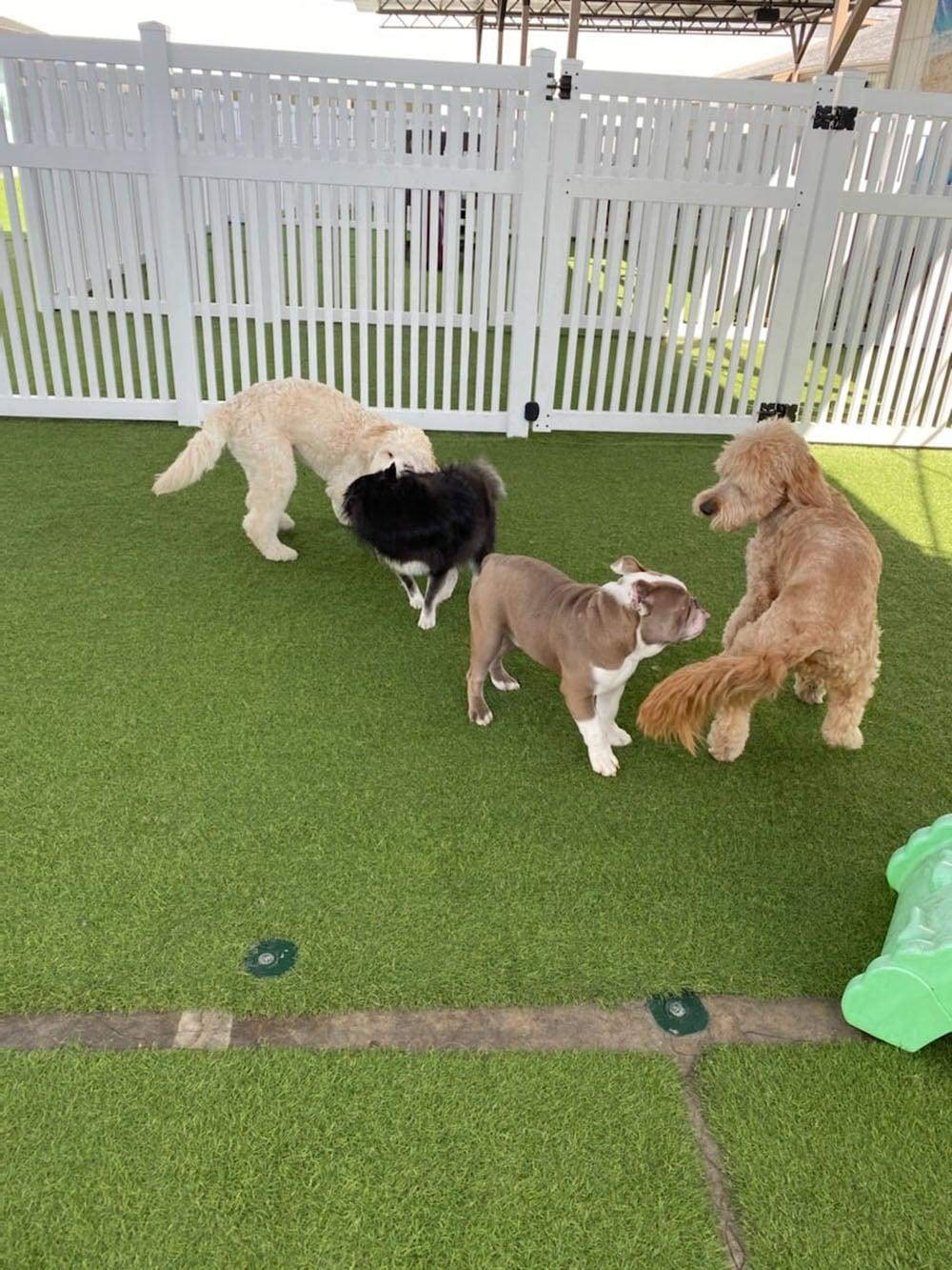 dogs resort gallery 2