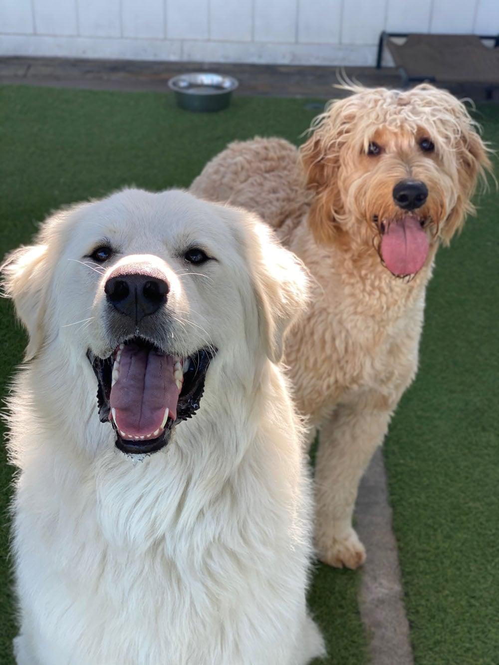 dogs resort gallery 20