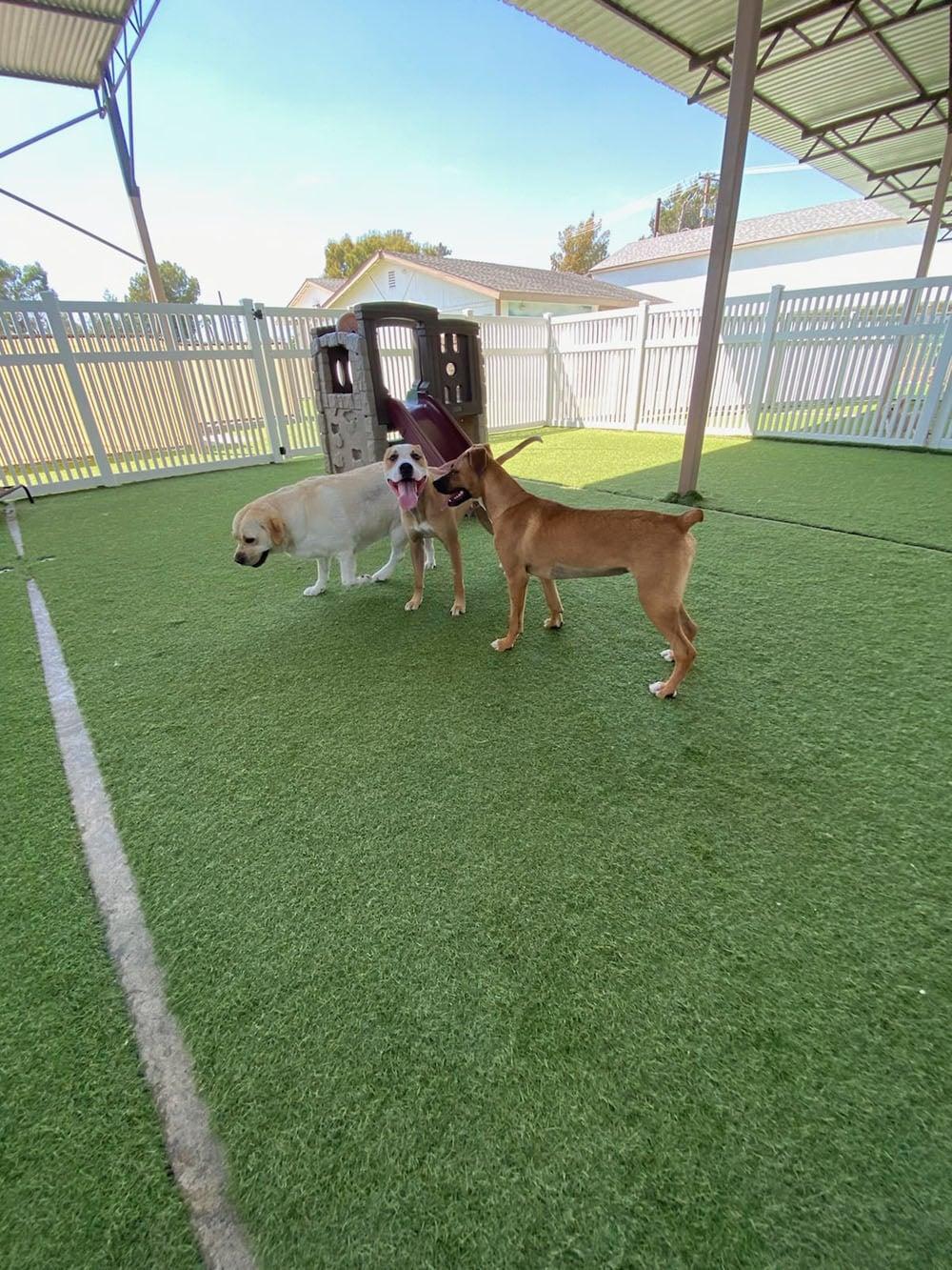 dogs resort gallery 21