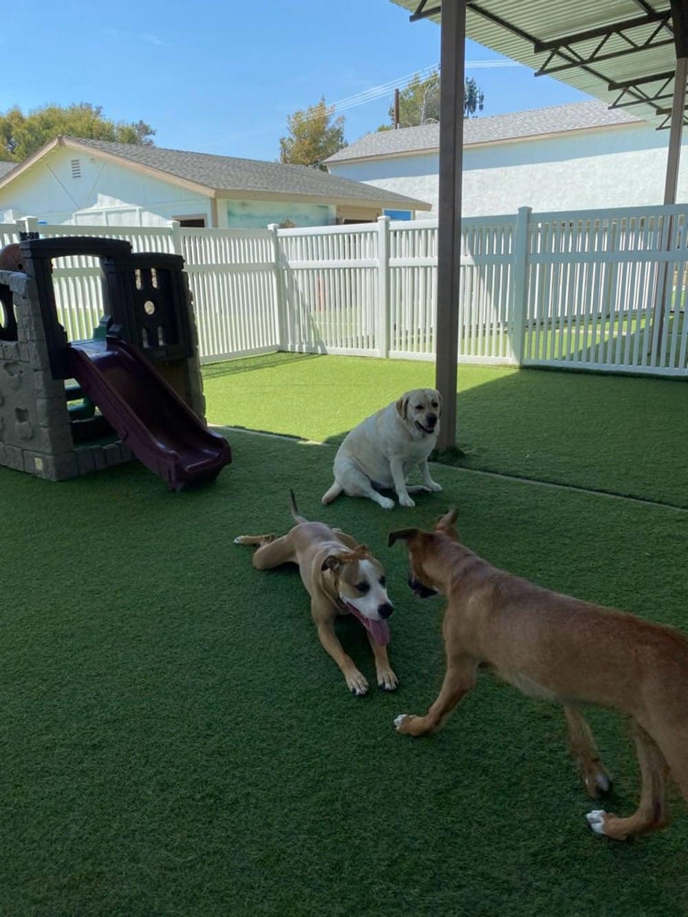 dogs resort gallery 22