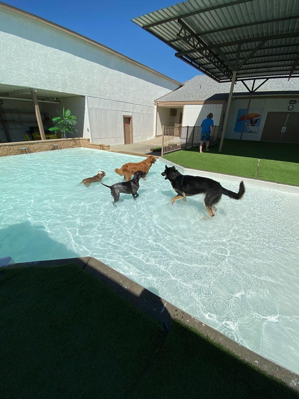 dogs resort gallery 23