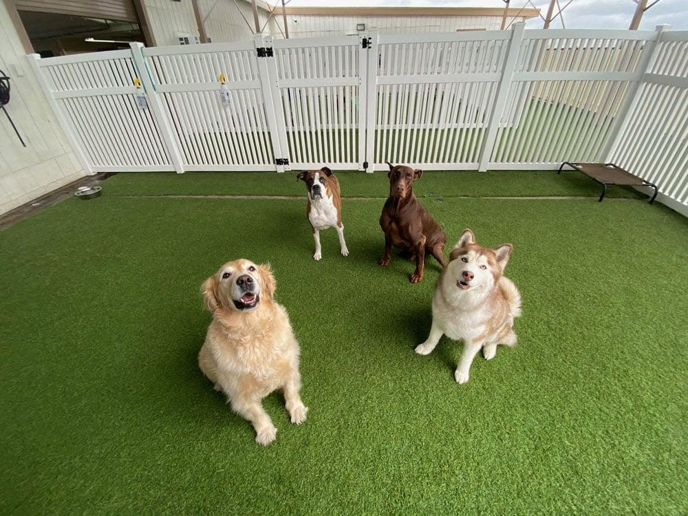 dogs resort gallery 3