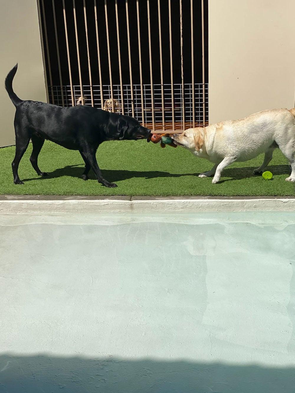 dogs resort gallery 33