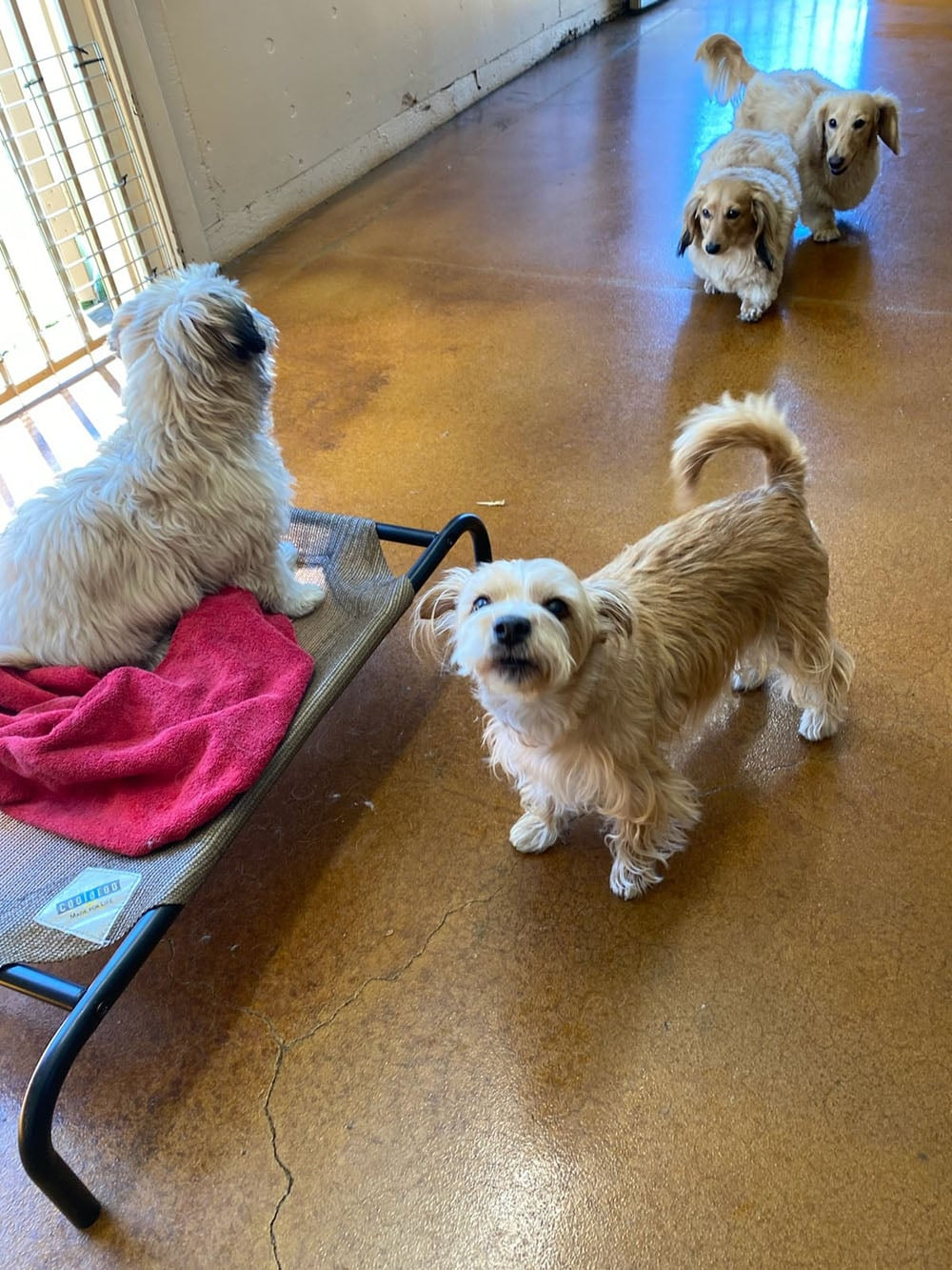 dogs resort gallery 34