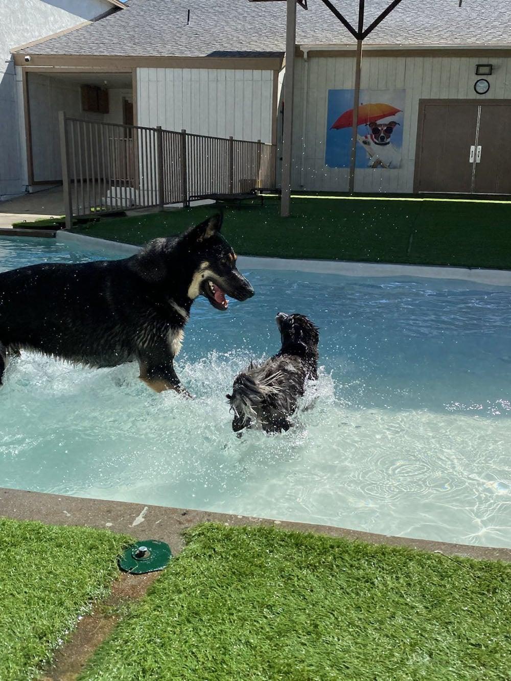 dogs resort gallery 35