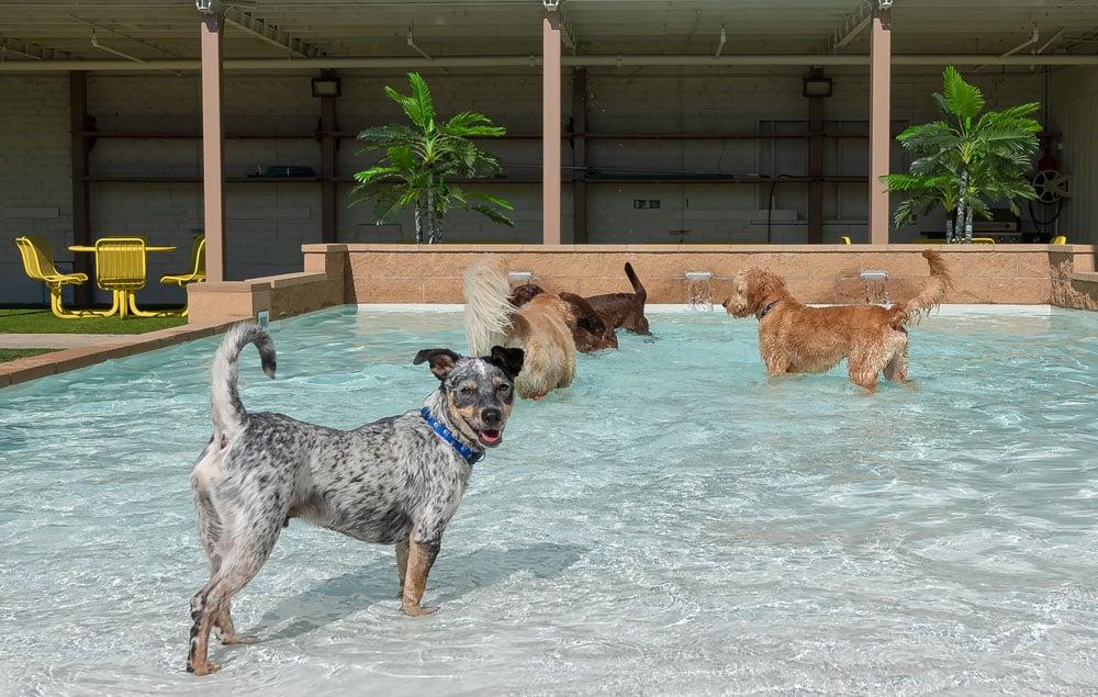 dogs resort gallery 5