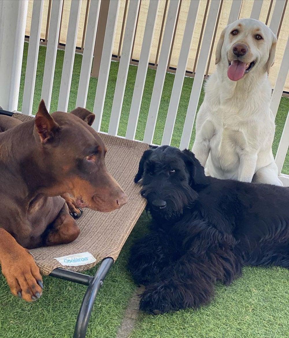 dogs resort gallery 7