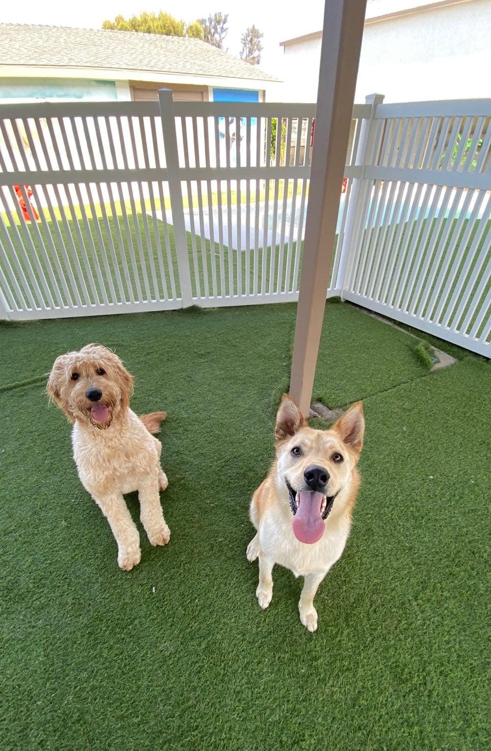 dogs resort gallery 8