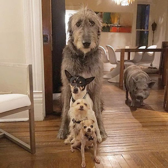 Man-Dedicates-Life-To-Adopting-dogs - steve grieg
