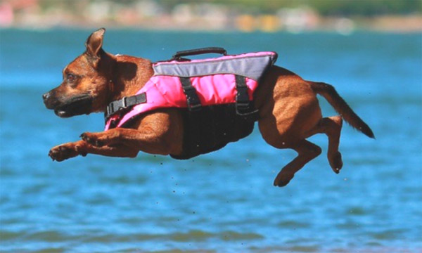 dog_jumping_into_water_lifejacket-1024x432 copy