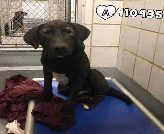 ron the shelter dog