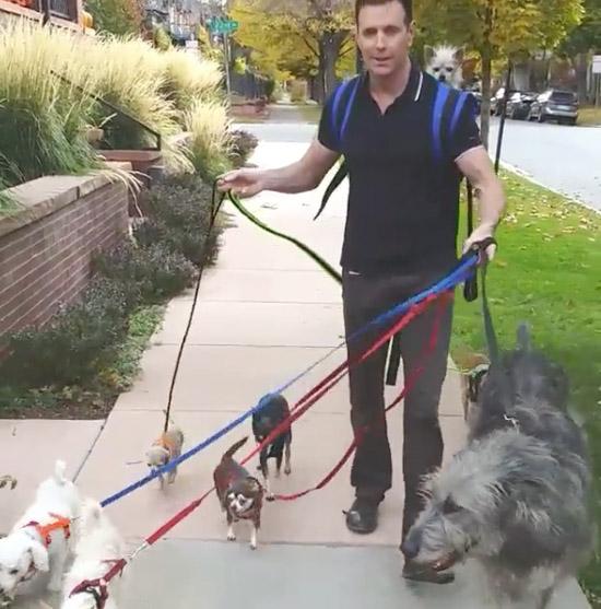 steve grieg and dog walk