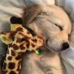 More Sleeping Puppy GIFs Plus 1 Bonus GIF