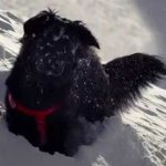 Sun Dog, The Happiest Dog On The Mountain