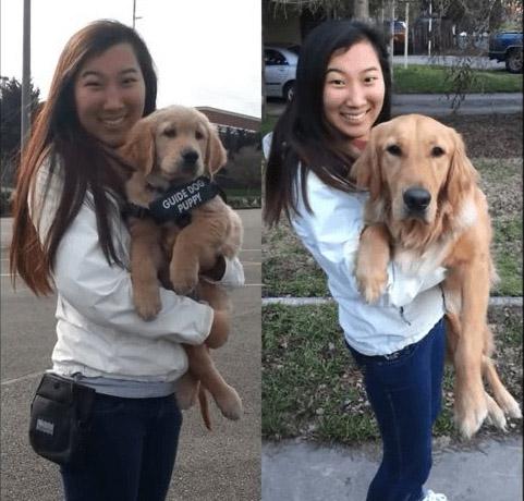 lombard former guide dog and hana kim
