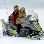 Henry The Ski Patrol Dog