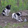 puppies-of-chernobyl-380