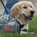 ptsd service dog