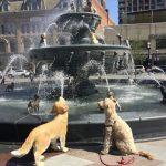 Toronto's New Dog Fountain At Berczy Park