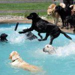 Doggie Pool Parties