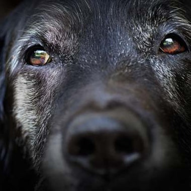 Longevity Tips For Your Dog