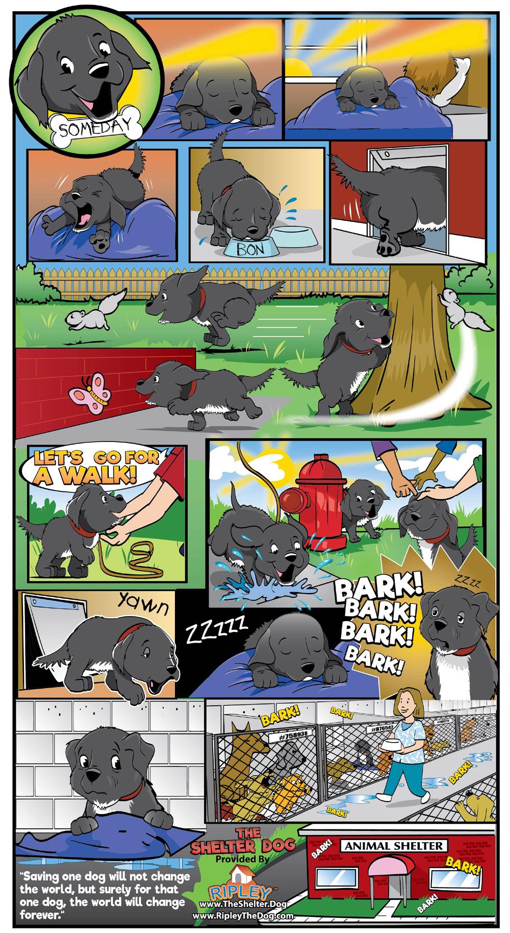 Bon The Shelter Dog in Someday