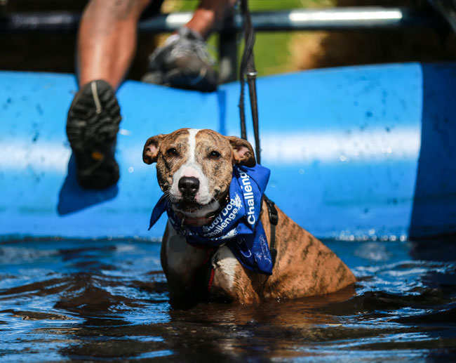 muddy-dog-challenge-1