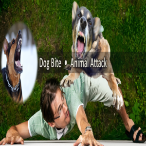 Dog Attack lawyer