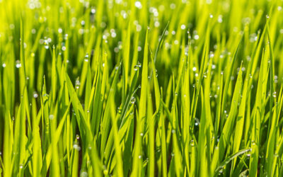 How to Water Your Grass For Healthy Lawn Care