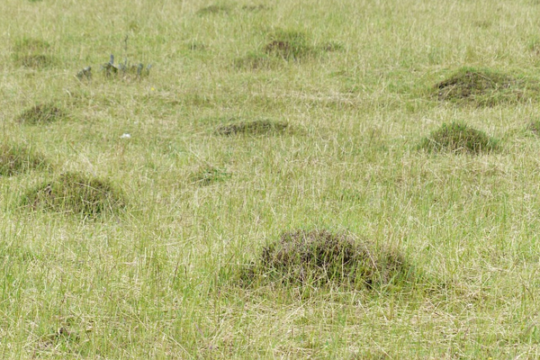 Lawn Care Tips to Keep Ants Away