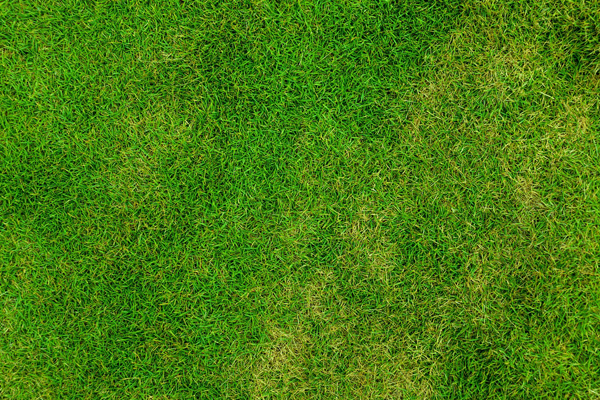 Getting Rid Of Grub Worms For A Healthy Green Lawn Greener