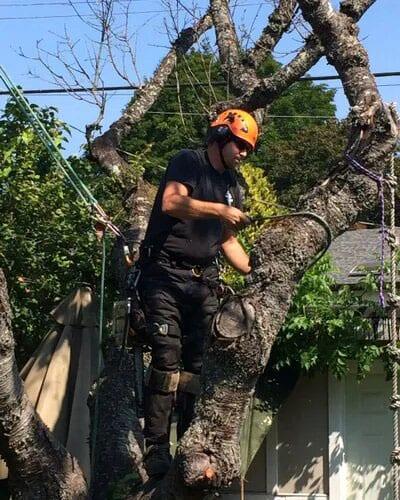 Heritage Tree Service