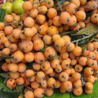Nisperos fruit