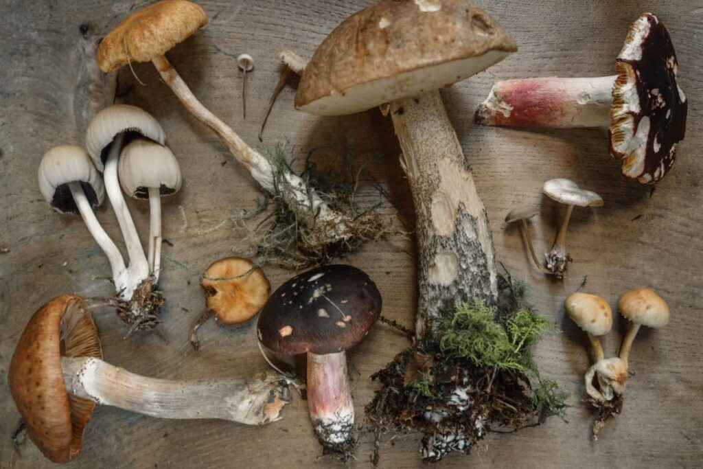 Image of mushrooms which have compounds that are great for building immune system.
