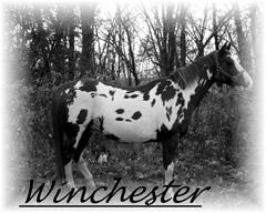 Winchester240x192