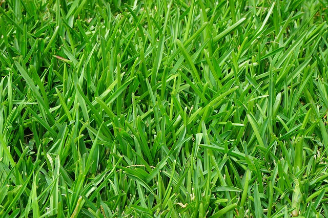 Grass on a lawn