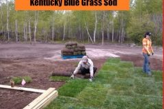 Sod Installation - FRESH GRASS - Kentucky Bluegrass North Bay Ontario 7