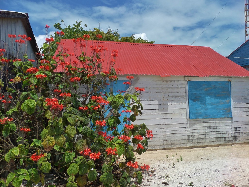 Xcalak , costa Maya, house