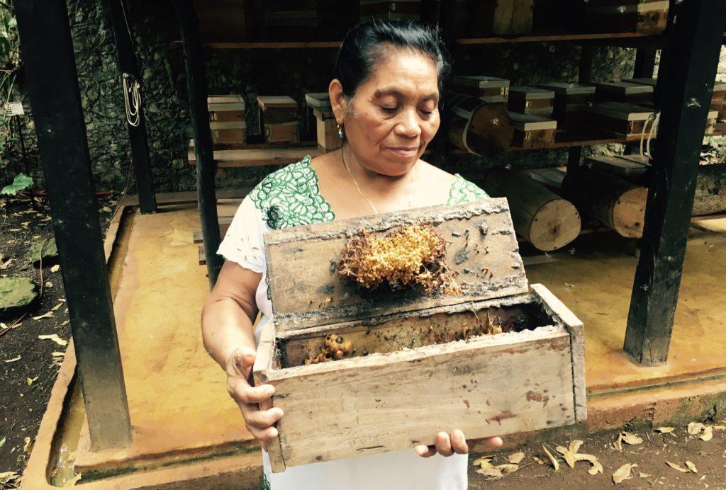 yucatan honey