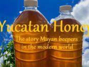 Yucatan Honey