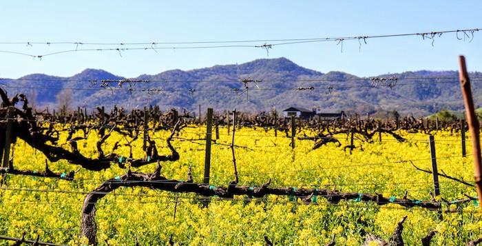 morgaen lee vineyard