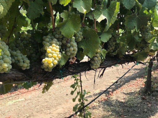Wine Foundry Sauvignon Blanc