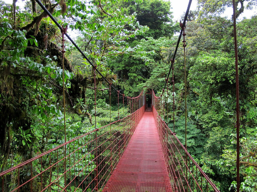 Hanging Bridge in Monteverde Cloud Forest