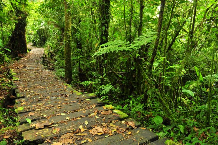 trail in monteverde cloud forest costa rica